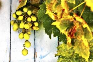 druiven 1